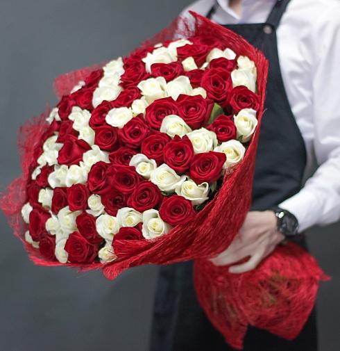 151 красно-белая роза