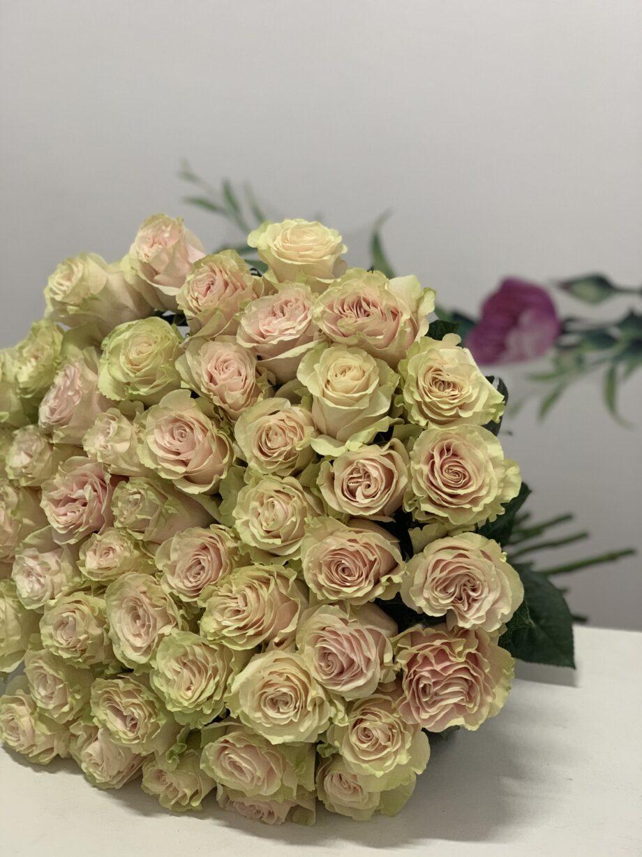 51 Роза сорта Мондиаль