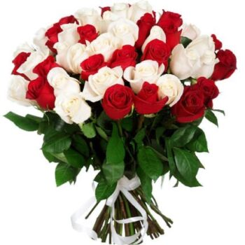 51 красно белая Роза!
