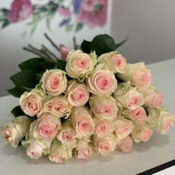 25 пудровых роз